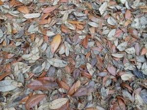 Spring Oak Tree Pollen 001