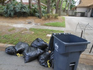 Uncollected Yard Waste Today 003