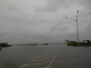 Courtney Campbell Causeway 017